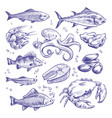 seafoods hand drawn sea fishes oysters mussels vector image vector image