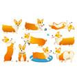 set cute dogs breed welsh corgi pembroke on vector image