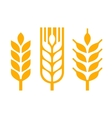 Wheat Ear Spica Icon Set vector image vector image