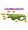 Diagram showing parts of crocodile vector image vector image