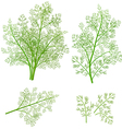 bunch fresh dill herb isolated set vector image