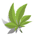 cannabis green leaf logo vector image vector image