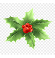christmas holly branch realistic vector image vector image