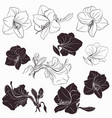 collection hippeastrum flowers shapes in line vector image vector image