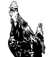 Crowing Rooster vector image vector image