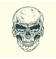 Skull of human vector image