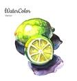 hand painting abstract watercolor lemon vector image