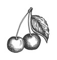cherry hand drawn sketch fruit vector image