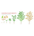 chickpea plant growth stages infographic elements vector image vector image