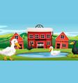 duck at farm vector image vector image