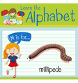 Flashcard letter M is for millipede vector image vector image