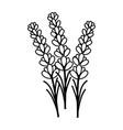 lavender flower floral hand drawn design sign vector image vector image