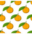 mandarin orange hand drawn colored sketch as vector image vector image