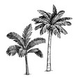 ink sketch palm trees vector image