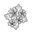 mallow floral hand drawn design sign vector image vector image
