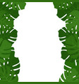 tropical monstera leaves frame vector image vector image
