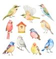 Watercolor set of birds vector image