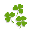 shamrocks and the four leaf clover vector image