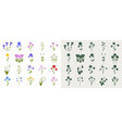 a set wildflowers in a flat style and vector image vector image