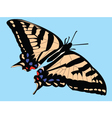 butterfly with background vector image vector image