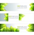 Eco Banners Template vector image vector image