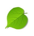 green leave vector image