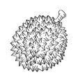 line drawing of durian -simple line vector image