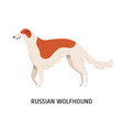 russian wolfhound or borzoi stunning lovely cute vector image vector image