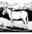donkey standing vector image vector image