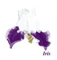 Luxury iris vector image vector image