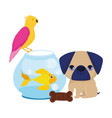 pet shop little puppy bird fish and cookie animal vector image vector image