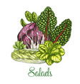 salads and leafy vegetables poster vector image vector image