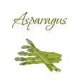 tasty veggies asparagus vector image vector image