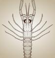 engraved lobster vector image
