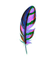 beautiful colored feather isolated on white vector image vector image