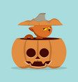 cartoon cat in pumpkin vector image