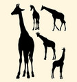 cute giraffe gesture animal silhouette vector image vector image