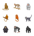 forest monkeys icons set cartoon style vector image vector image