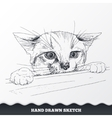 Hand drawn cat face Sketched playful kitten vector image