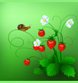 ripe wild strawberry and a vector image vector image