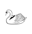swan icon isolated on background vector image vector image