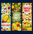 exotic fruits organic tropic fruit harvest vector image vector image