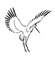 hand drawn sketch of stork on vector image