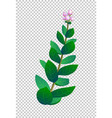 indian plant vector image