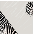 Abstract zebra background vector image vector image