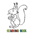 Coloring book of lttle funny squirrel vector image