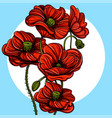 hand drawn red poppies floral design element for vector image vector image