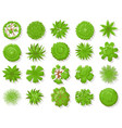 top view plants tropical trees green plant tree vector image vector image