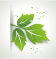 fresh green leaf organic eco friendly symbol vector image vector image