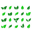 set of green leaves icons vector image